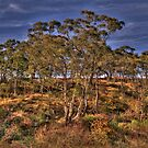 Bushland Dreaming - Rockley, NSW - The HDR Experience by Philip Johnson
