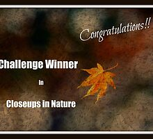 Closeups in Nature Banner by Karen Checca