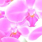 An Abundance of Orchids by Melanie Simmonds
