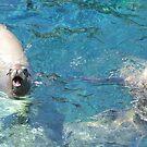 Seal Trio Deep in Conversation by TVANO12345