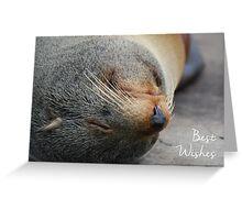 Fur Seal Birthday Card Greeting Card
