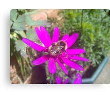 bee on purple daisy like flower Canvas Print