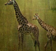 Giraffes by Catherine Hamilton-Veal  ©