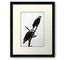 bald eagle pair in the rain Framed Print
