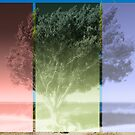 Hazed Tree by mrthink