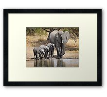 Elephant Mom and Babies Framed Print