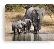 Elephant Mom and Babies Canvas Print