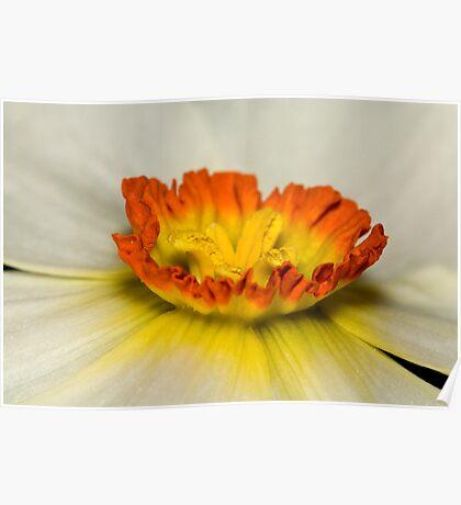 White daffodil crown Poster