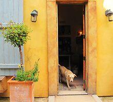 Dog in Door by Christine Wilson