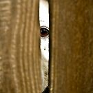 I See You by Howard Lorenz