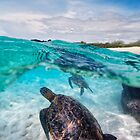 Double Honu by Flux Photography