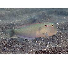 Five-finger Razorfish Photographic Print