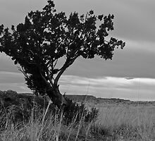 Tree: Dead and Alive by Nick Vasko