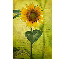 Sunflower Notes Photographic Print
