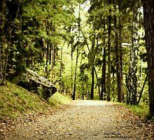 Walk across the woods by ankitsinghal