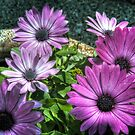 Family Of Flowers (HDRI) by James Zickmantel