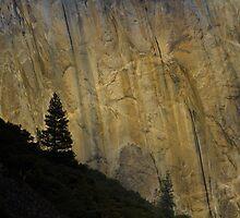 Lone Tree in Yosemite by Paul Judy