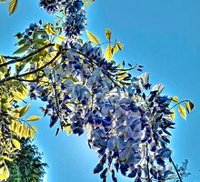 Backlit Wisteria (HDRI) by James Zickmantel