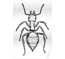 Ant Drawing Poster