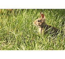 Silly Rabbit Trix Are For Kids Photographic Print