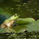 Bullfrog by naturalnomad
