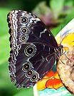 Butterfly Wings - Key West Florida by Debbie Pinard