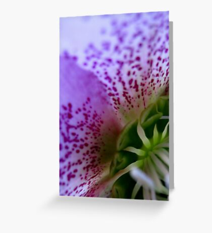 Glowing, a close-up of a hellebore flower Greeting Card