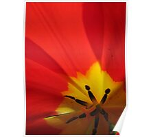 Abstractions... close-up of a tulip Poster
