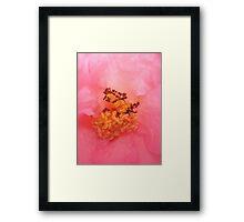 The Inner Workings of a Rose Framed Print