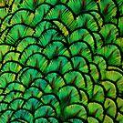 Patterns from bird by loiteke