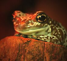 Frog in red by warlik