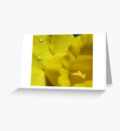 Deepest Yellow of a daffodil flower Greeting Card