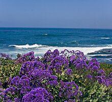 La Jolla Coast IV by Heather Friedman