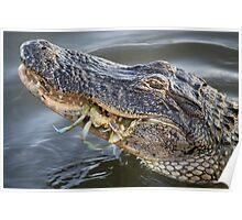 Alligator eating a Blue Crab Poster