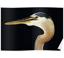 Great Blue Heron at Night Poster