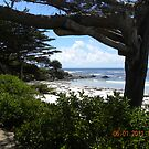 The Butterfly House at Carmel Point by Sandra Gray