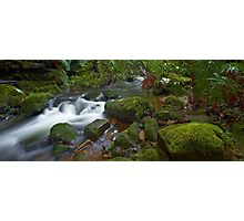 Flowing Moss - Blue Mountains NSW Photographic Print