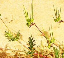 My Weeds, My Abstract by Lenore Senior