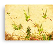 My Weeds, My Abstract Canvas Print