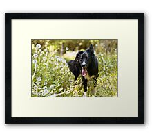 Are you coming? Framed Print