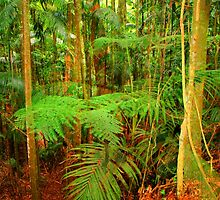 Rainforest Tamborine Mountain by Virginia McGowan