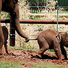 Baby Elephant by Taylor Russell