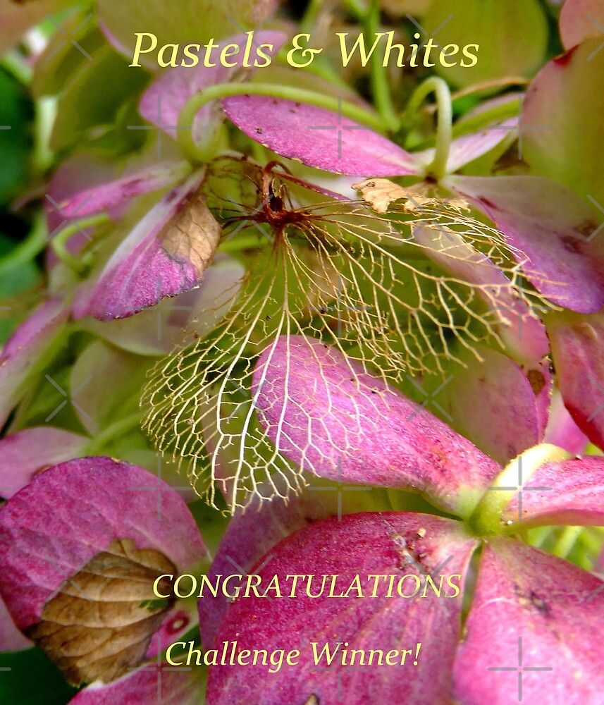 Pastels and Whites Winners Banner by su2anne