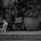 Backward Glance by iamYUAN