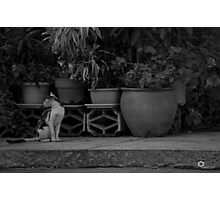 Backward Glance Photographic Print
