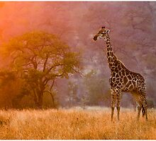 African morning in Balule South Africa by Gorazd Golob