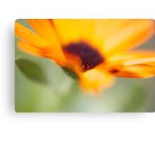 Flower Flower  Canvas Print
