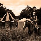 'Shining Knight'  - Gumeracha Medieval Fair  by Gerijuliaj