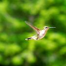Little Humming Bird by Molly  Kinsey