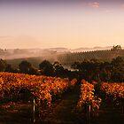 Misty Vineyard, Nr Gumeracha, Adelaide Hills, SA by Gerijuliaj